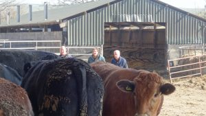 Phil, Chris, Ron & their cattle